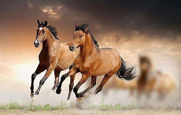 horses-pemf8000