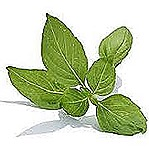 pemf herbs to heal